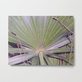 Saw Palmetto Abstract Metal Print