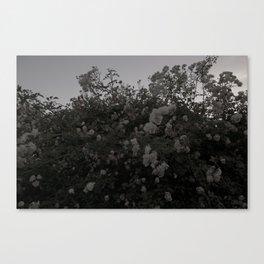 40hz: Waves Canvas Print