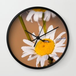 Little bee and wild daisies Wall Clock