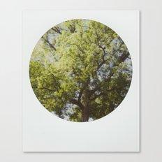 White Oak Instant Photo Canvas Print