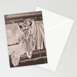 Kitty Noir, Indochinese Tiger Stationery Cards