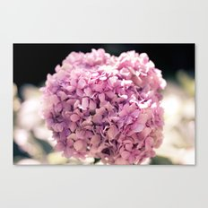 The beautiful hydrangea Canvas Print