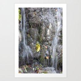 small watercourse, color photo Art Print