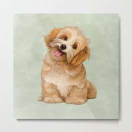 Smiling Dog (Havanese) Metal Print