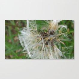Divine Dandelion Canvas Print