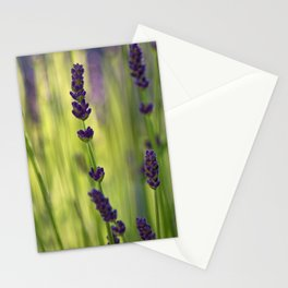 lavender 1 Stationery Cards