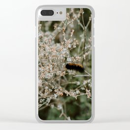 Wooly Bear Caterpillar on Plants - Big Bend Clear iPhone Case