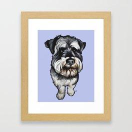 Barney the Miniature Schnauzer Framed Art Print