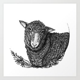 Polypay Sheep Art Print