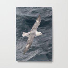 Seagull flying over Arctic Ocean Metal Print