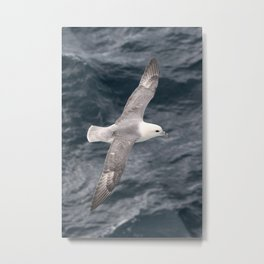 Seagull flying over Arctic Ocean Metal Print