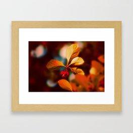 Autumn Berrys Framed Art Print