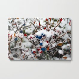 Blueberries, first snow Metal Print