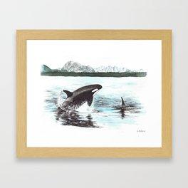 Orca's Framed Art Print