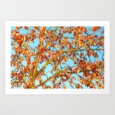 Autumn color glory Art Print