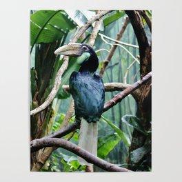 Female Hornbill Poster