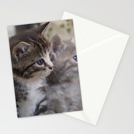 Kittens Stationery Cards