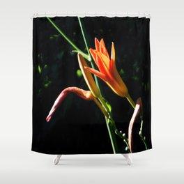 Orange Daylilies Shines Shower Curtain