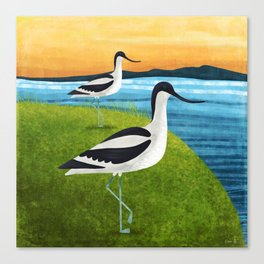 Two Avocets In Suffolk Canvas Print