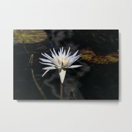 White Lilly Metal Print