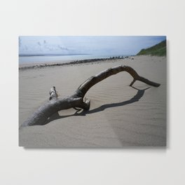 DRIFTWOOD ON BEACH NEAR CROW POINT NORTH DEVON Metal Print