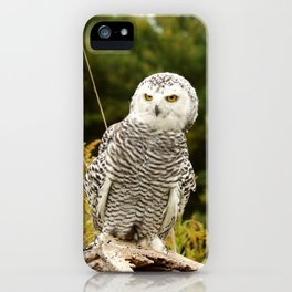 How Dare You iPhone Case
