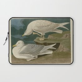 282 White winged silvery Gull Laptop Sleeve