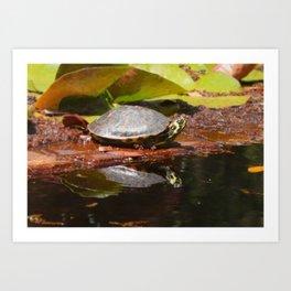 Turtle Sunbathing Art Print