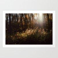 Sunlight Photo Print Art Print