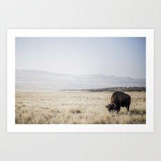 Bison Grazing Art Print
