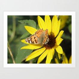 Painted Lady Butterfly Picks Pollen Art Print
