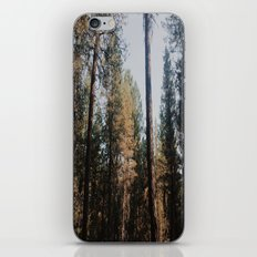 Above the Treeline iPhone & iPod Skin