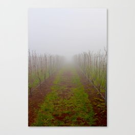 foggy in a wine vinyard in dundee Canvas Print