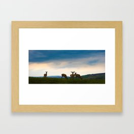 Deer On The Highland Framed Art Print