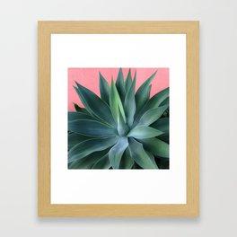 Agave succulent Framed Art Print