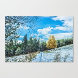 Larch in late autumn Canvas Print