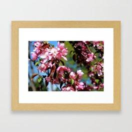 Spring Minnesota Framed Art Print
