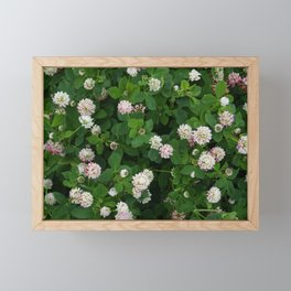 Clover flowers green and white floral field Framed Mini Art Print