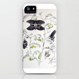 Lifecycle of Common Mormon Butterfly iPhone Case