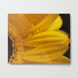Yellow Gerber Daisy Petals Metal Print