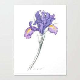 Iris 03 Botanical Flower * Lavender Purple Dutch Iris Canvas Print