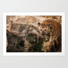 Chuckling Hyena Art Print