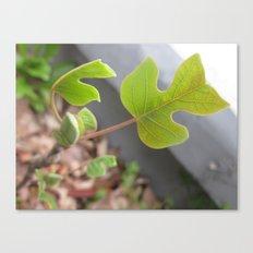 little leaf 7 Canvas Print