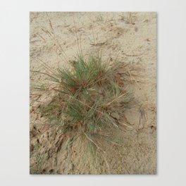 A Tuft of Grass Canvas Print