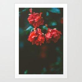 Pomegranate Study, No. 2 Art Print