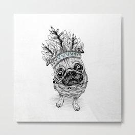 Indian Pug Metal Print