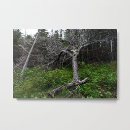 Forest Spirit (Full image skull and trunk)  Metal Print