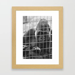 Sad Gorrilla  Framed Art Print