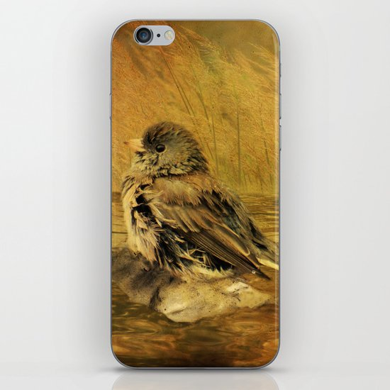 The Bathing Junco iPhone & iPod Skin
