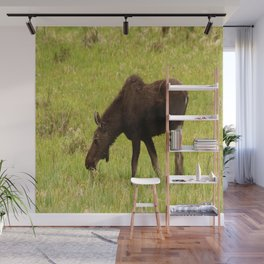 Young Moose Wall Mural